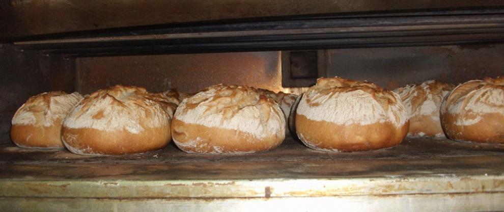 Sour dough bread baking in the oven at Redbournbury Mill